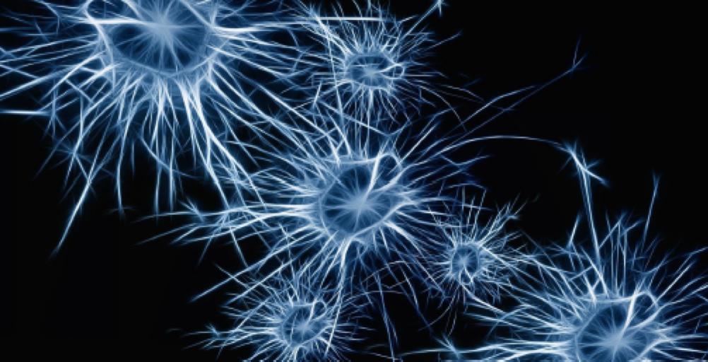 FAD in differita: Il funzionamento del cervello. Dalle esperienze di pericolo, fino al Disturbo Post Traumatico.